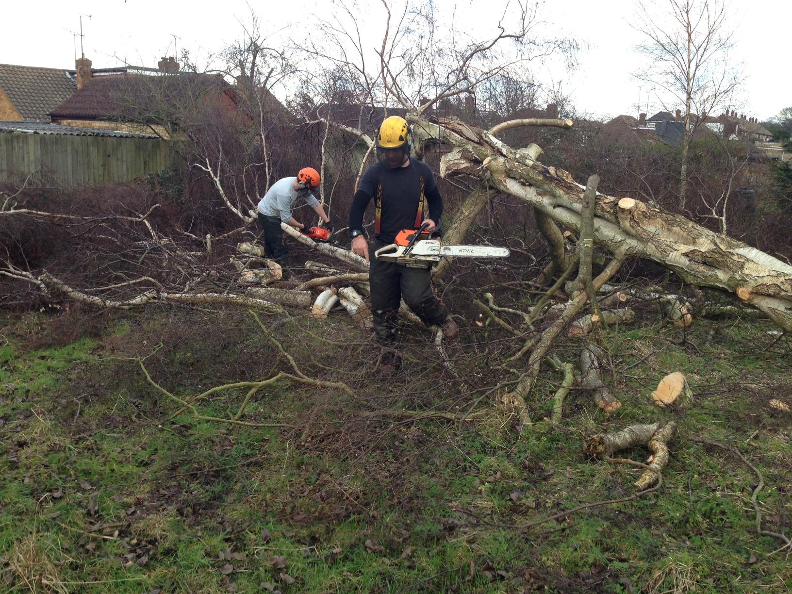 domestic tree felling