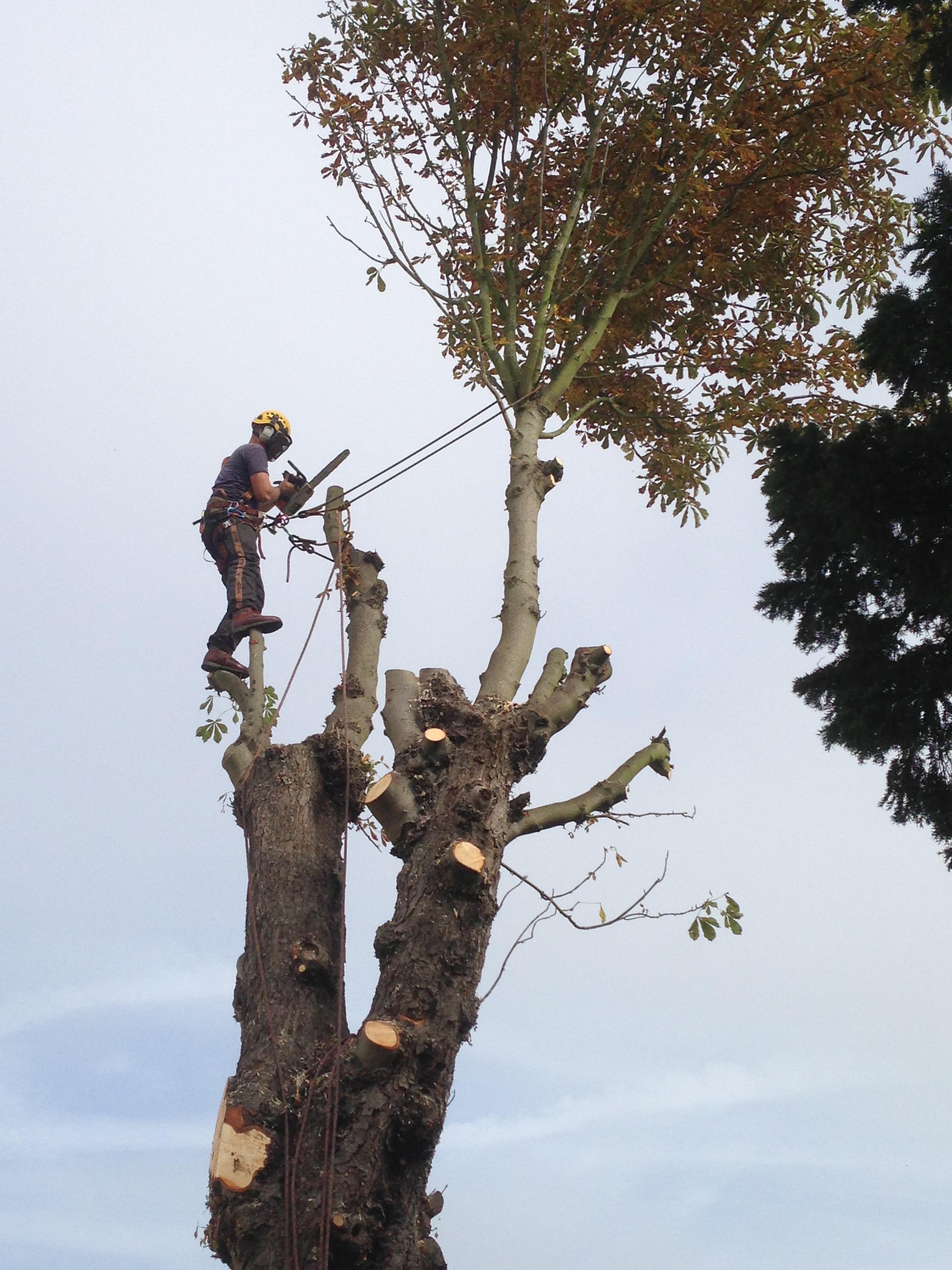 aerial tree cutting